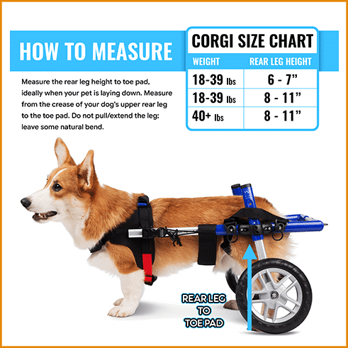 prime_img_Infograpics Wheelchair for Pet