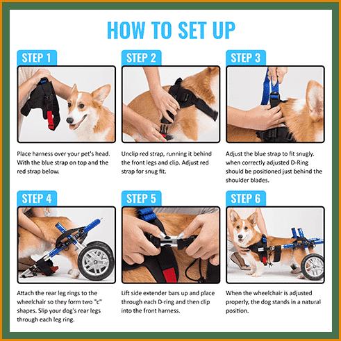 prime_img_Infograpics How to Setup Wheelchair for Pets