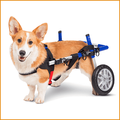 Dog Wheel Chair for Amazon