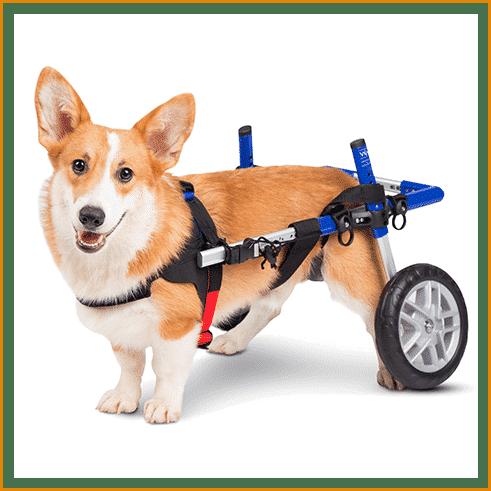 prime_img_Dog Wheel Chair for Amazon